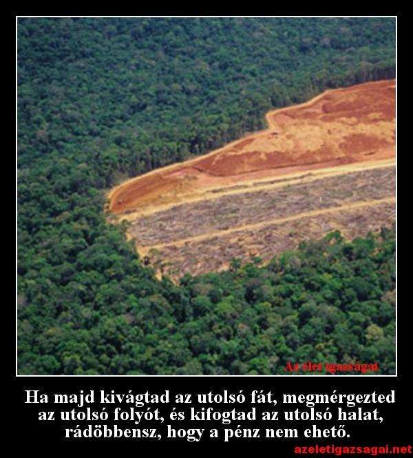 Ha majd kivágtad az utolsó fát, megmérgezted az utolsó folyót